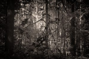 Rijkswoud